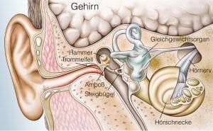 Hinter dem Trommelfell das Mittelohr mit Abfluß nach unten.
